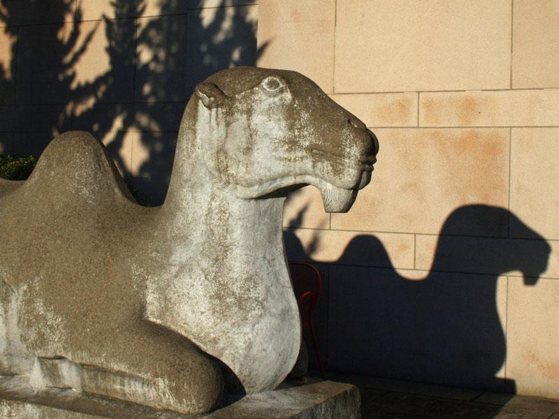 Asian Art Museum Camel  - Volunteer Park